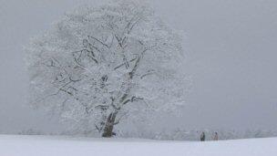 冬のサクラ桜.jpg